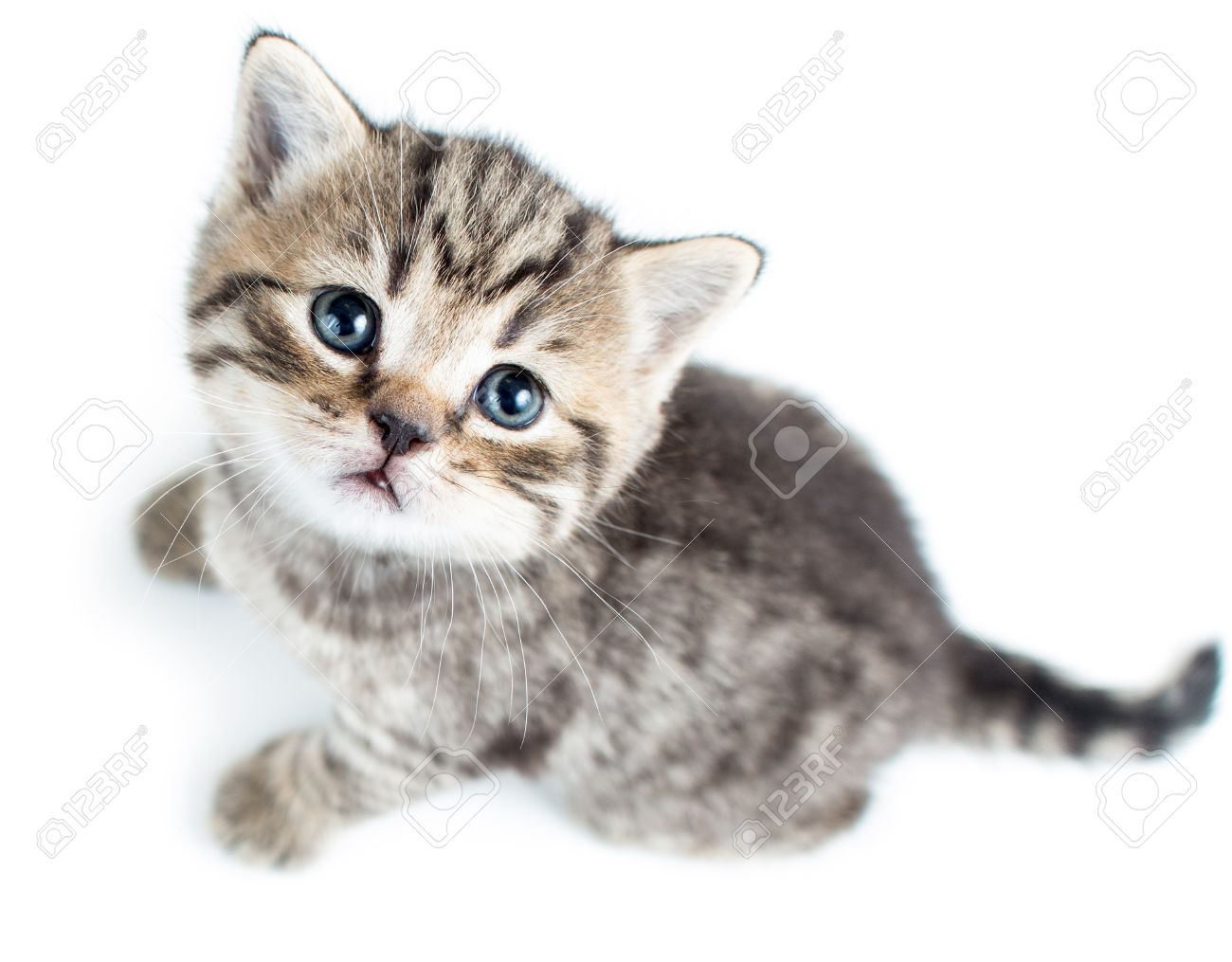 Top view of baby cat kitten on white background stock photo picture stock photo top view of baby cat kitten on white background thecheapjerseys Images