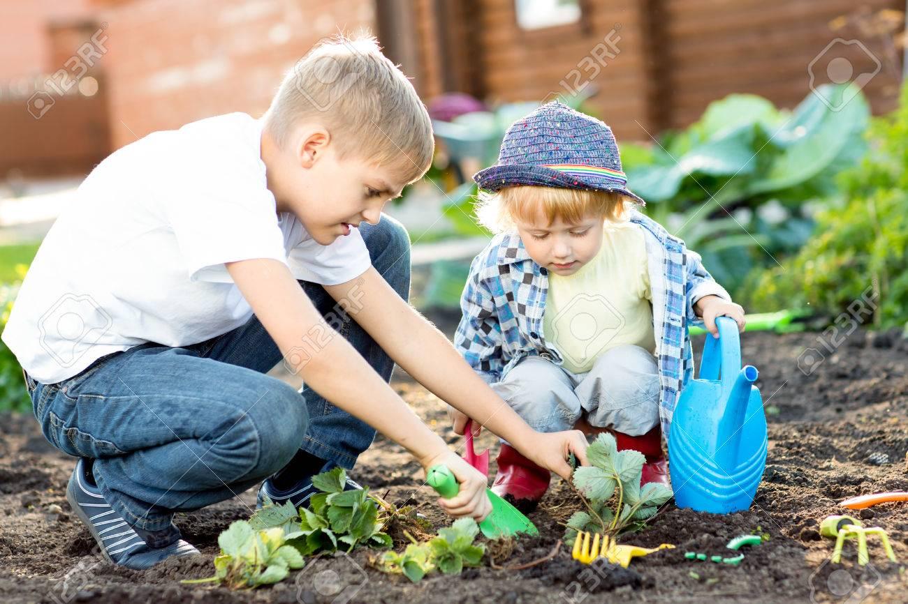 0b02acc8936 Foto de archivo - Los niños de siembra de plántulas de fresa en suelo  fértil para el exterior en el jardín