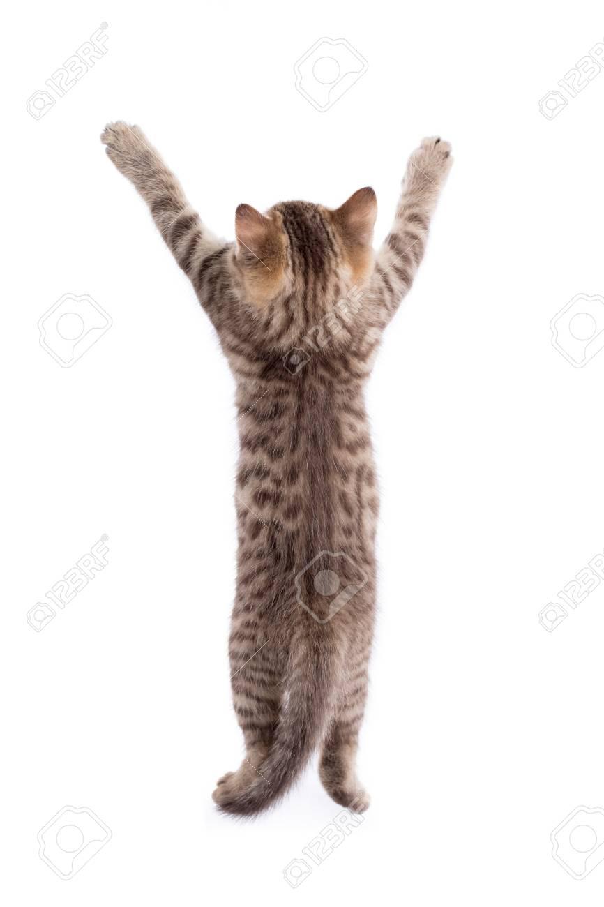 photo de la chatte arrière ébène bas porno