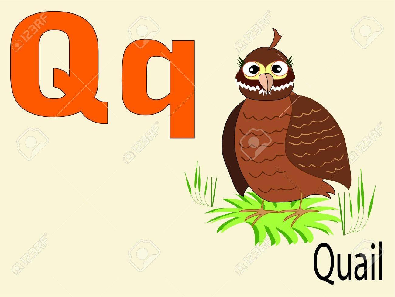 Animal alphabet Q Stock Vector - 10265100