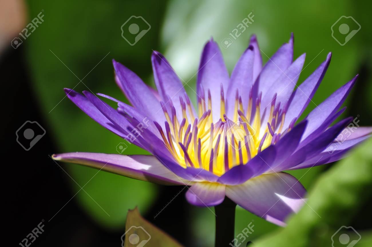 Lotus flower in a park in Hue - 8139753