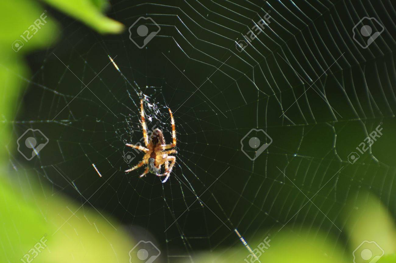 A successful spider has caught an insect in its web at a garden in Karlstad, Sweden Stock Photo - 8139788