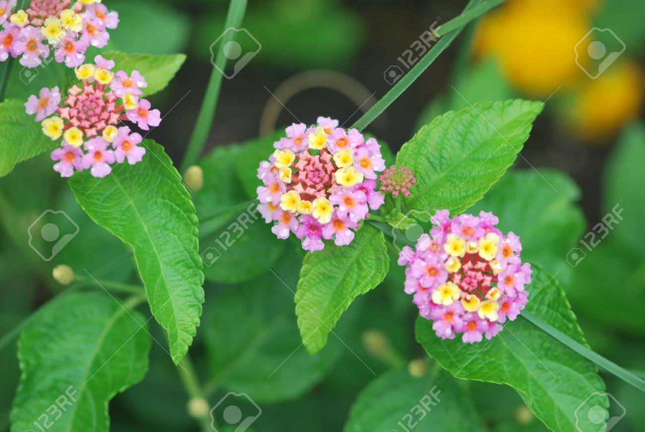 Tiny Multi Colored Flowers Stock Photo Picture And Royalty Free Image Image 3282196
