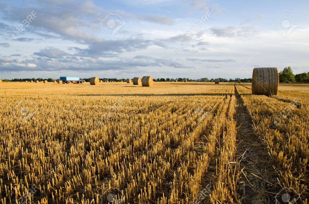 Rows in a stubble field Stock Photo - 15498685
