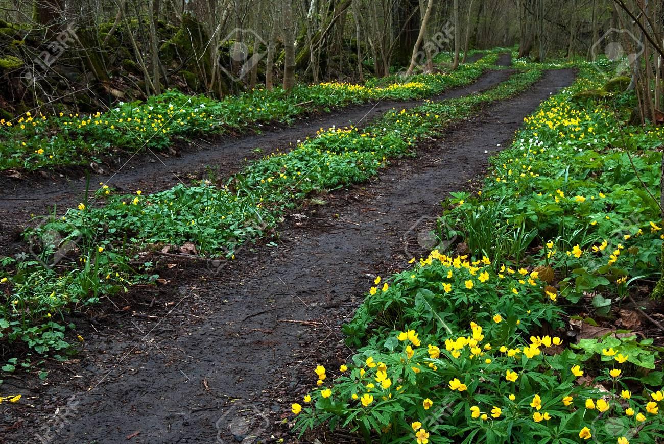 Yellow flowers at tracks Stock Photo - 17275315