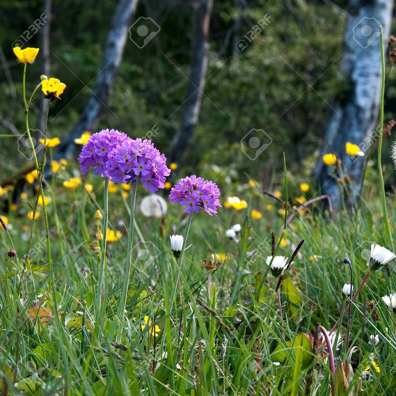 Blossom field at springtime Stock Photo - 17275249