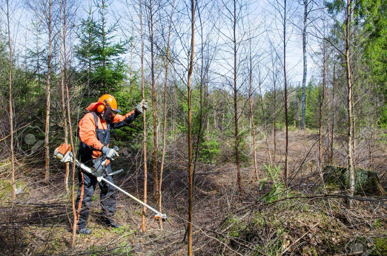 Man working with a brush cutter in a forest Stock Photo - 19451299