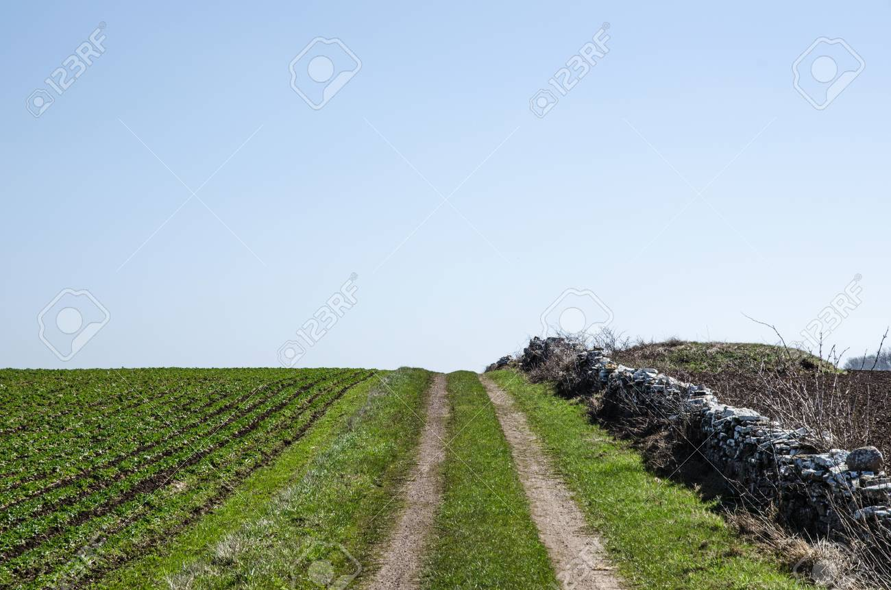 Farmers dirt road over a hill in a  rural landscape with green field Stock Photo - 19451439