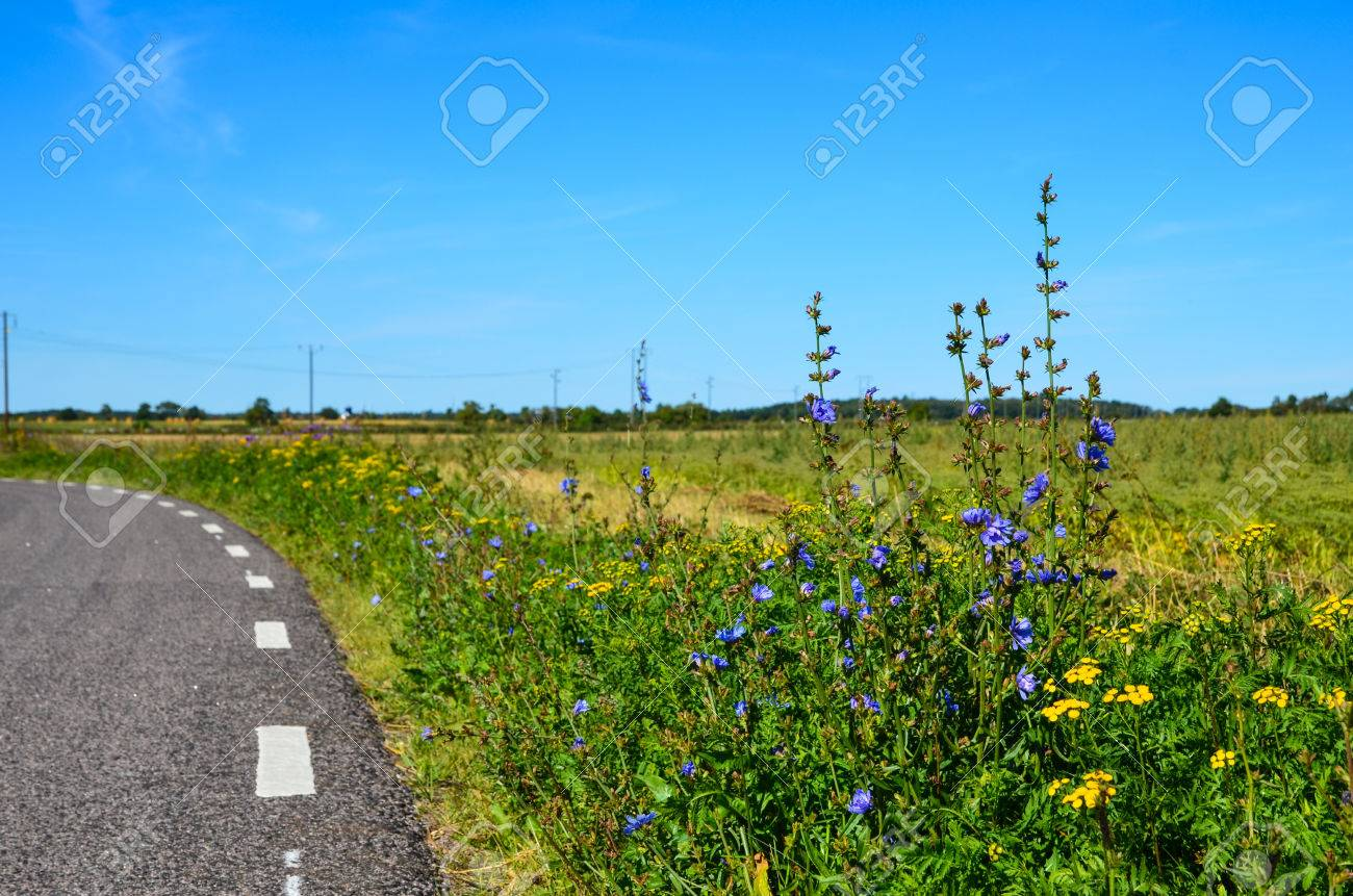 Road side flowers at the island Oland in Sweden Stock Photo - 22522322