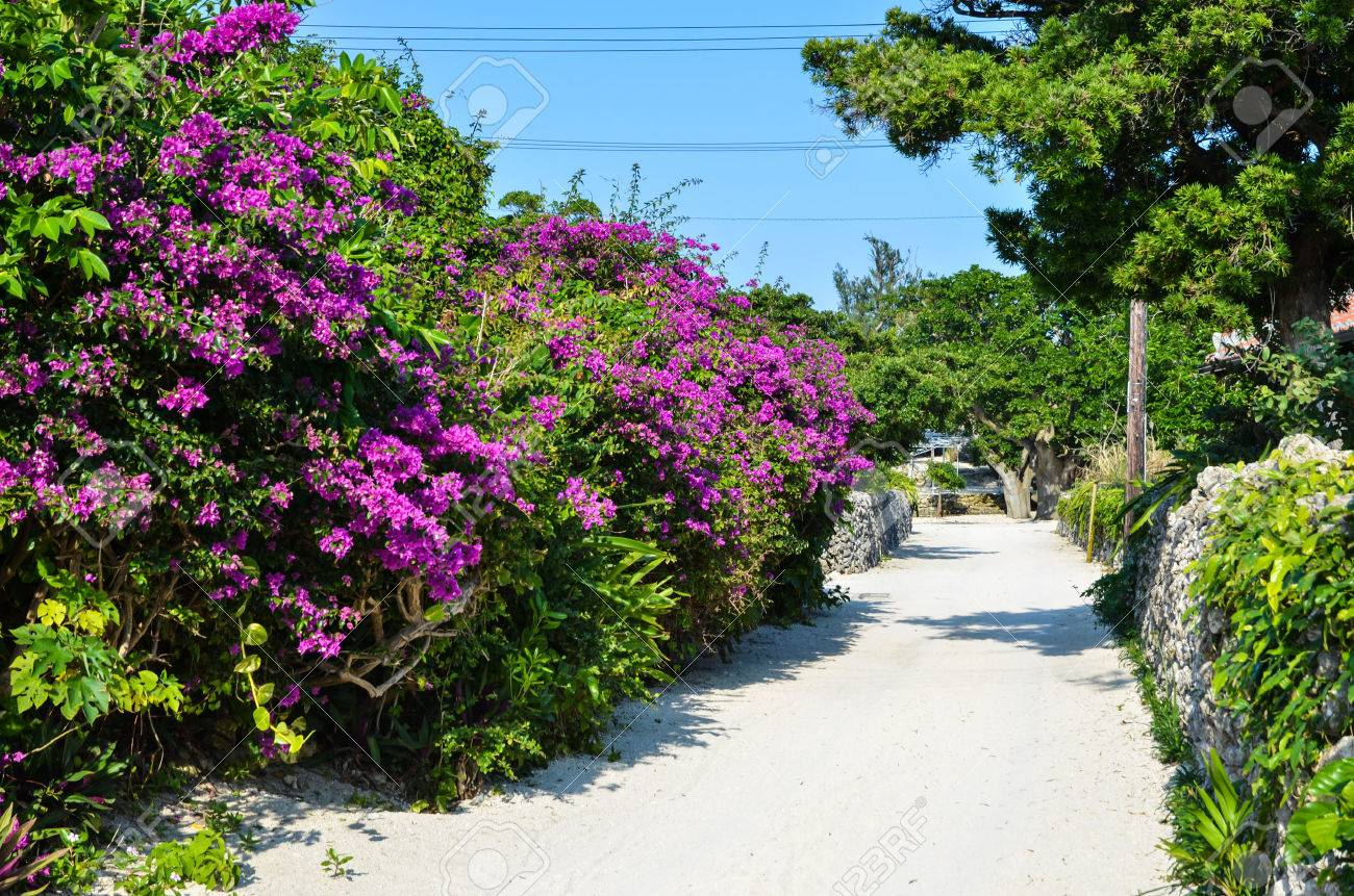 Flowers by a street at the tropical island Taketomi in Japan Stock Photo - 25108405