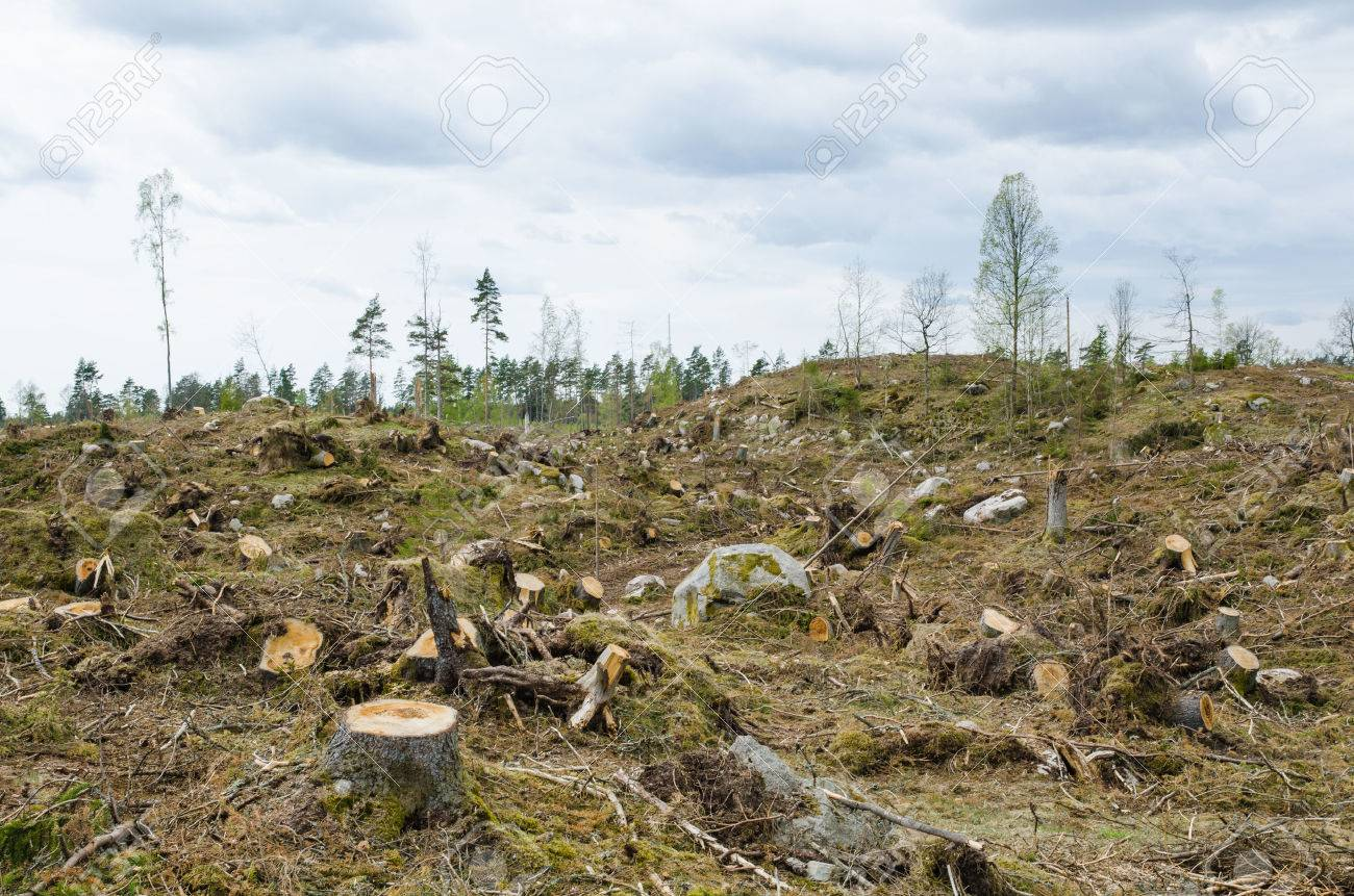 Stumps at a clear cut forest area Stock Photo - 28253523