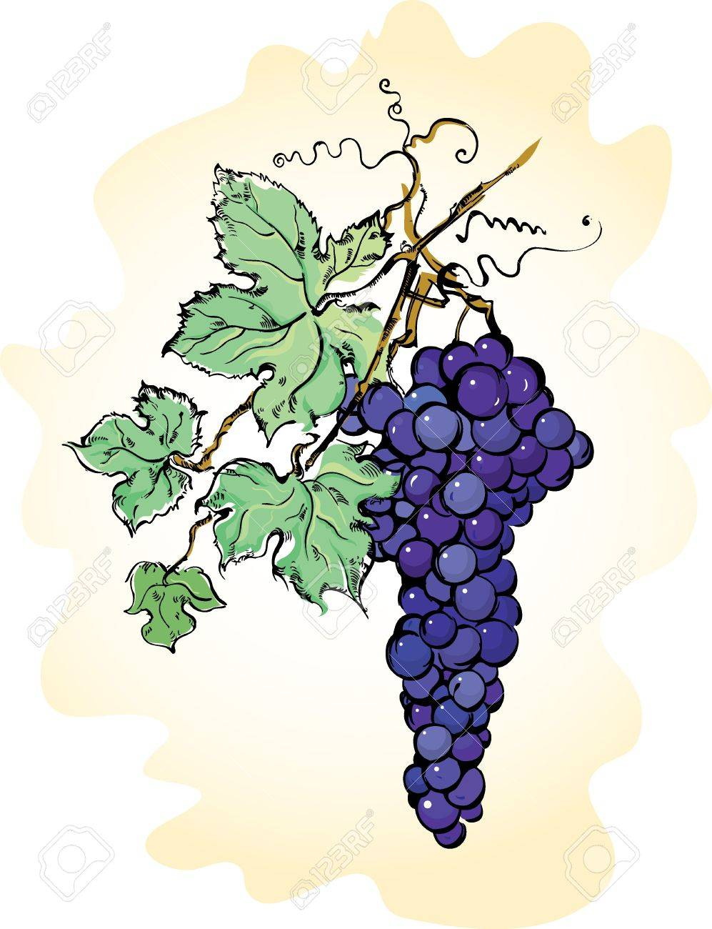 Vector illustration with grapes with leaves Stock Vector - 11042273