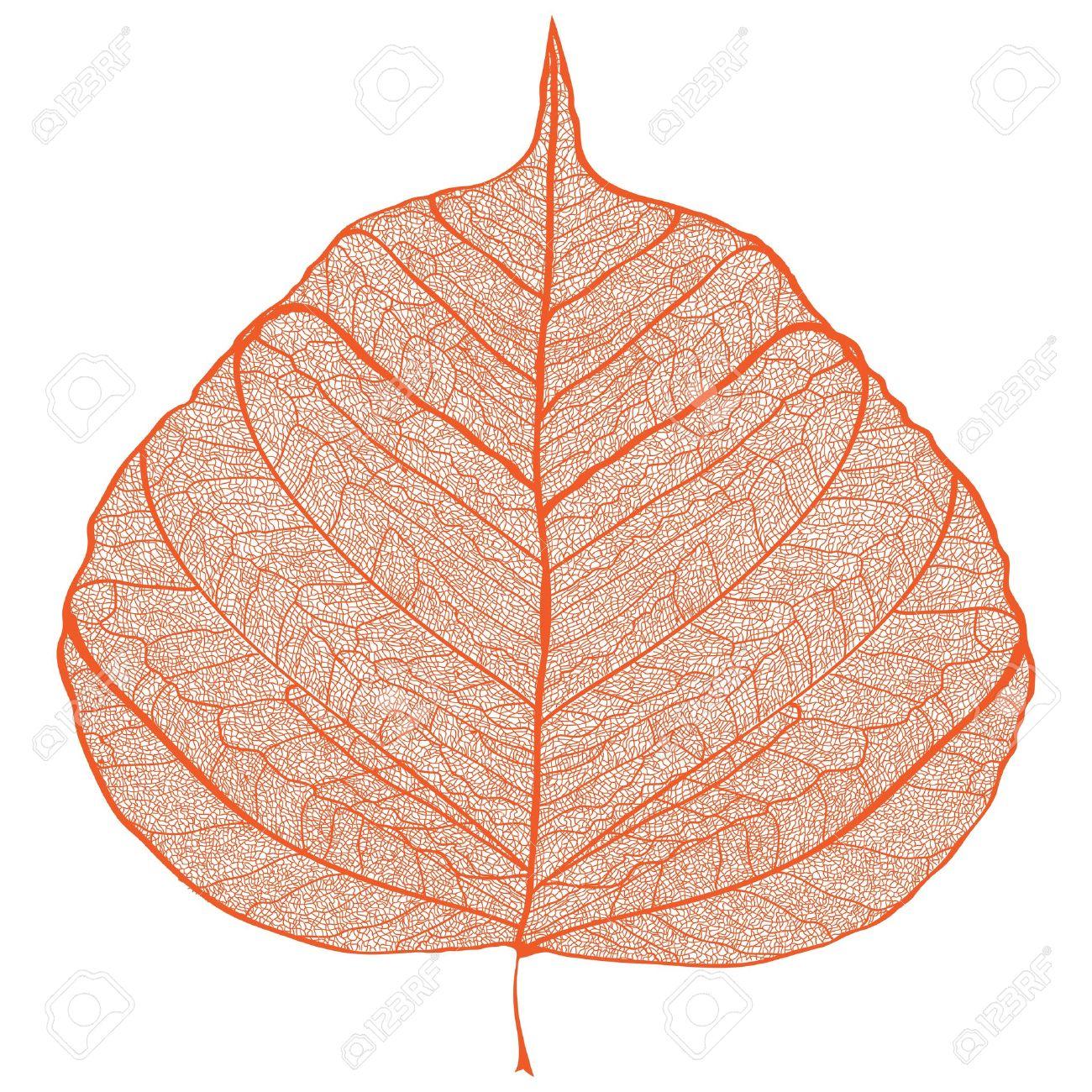Orange Leaf Skeleton on Black