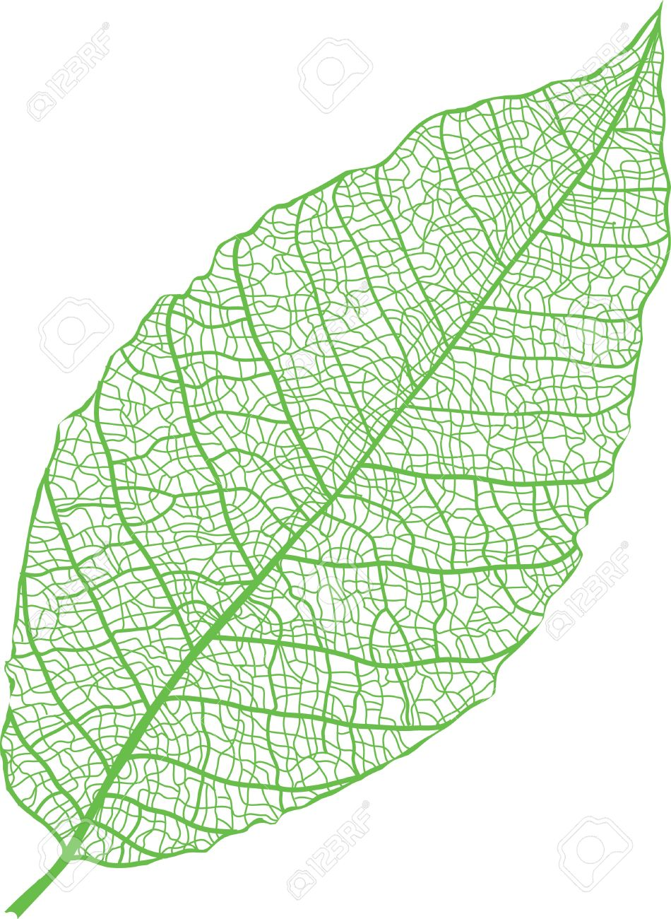 Green Leaf Skeleton