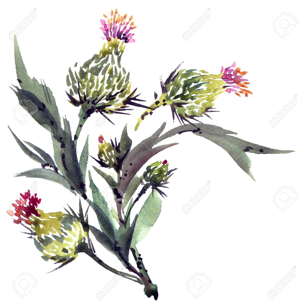 Watercolor Painted Thistle Flowers Bouquet. Blossom Meadow Plant ...