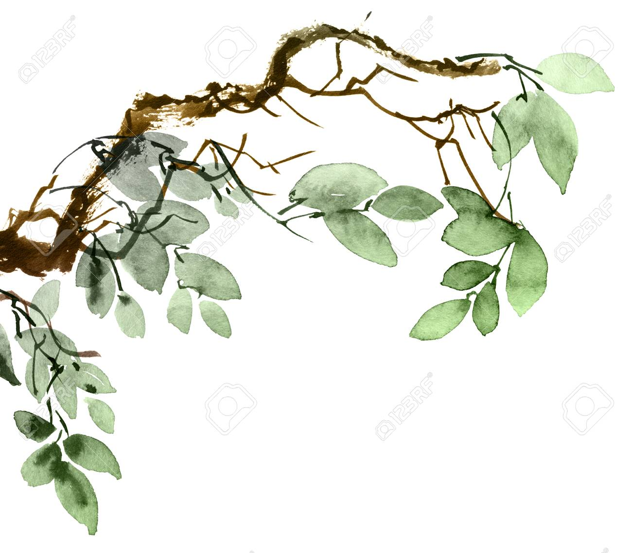 Watercolor And Ink Illustration Of Tree Branch With Leaves Oriental Stock Photo Picture And Royalty Free Image Image 120937896