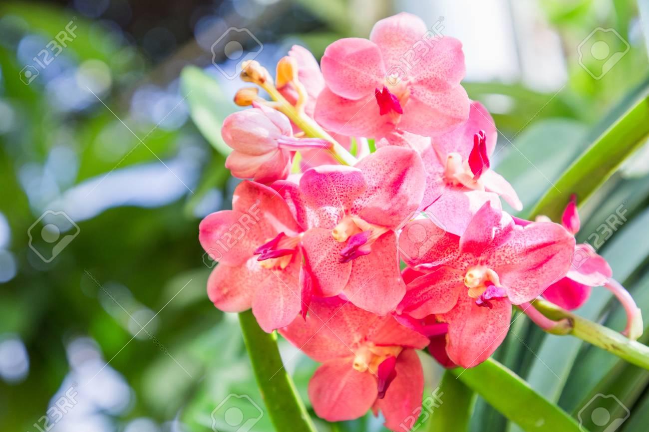 Fleur D\'orchidée Dans Le Jardin D\'orchidées à L\'hiver Ou Au ...
