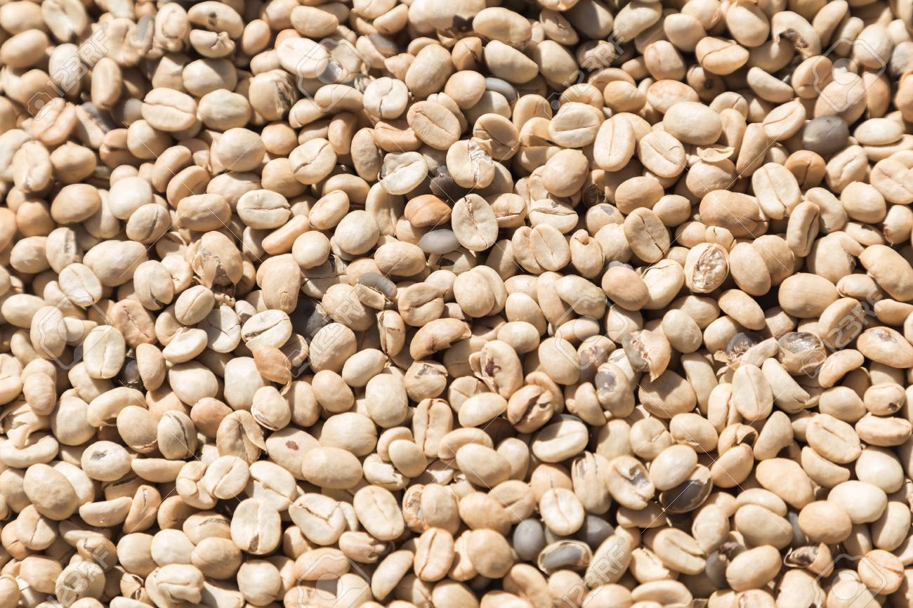 Unroasted Coffee Beans >> Coffee Beans Closeup Background Green Unroasted Coffee Beans