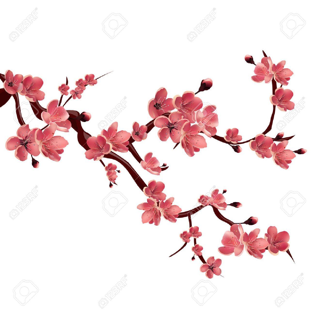 Branch of rose blossoming sakura . Japanese cherry tree. Vector Isolated Illustration on white background - 54341388
