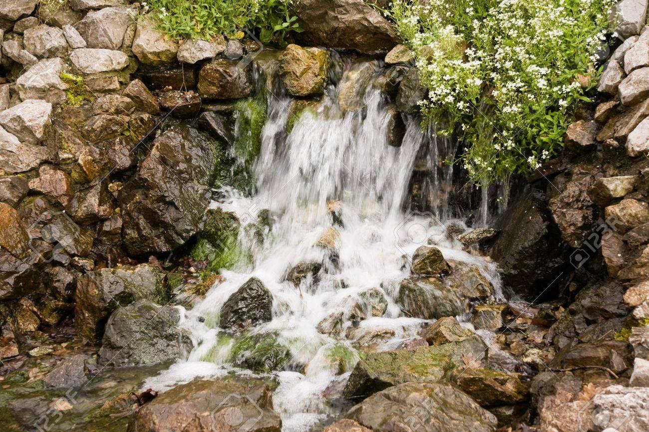 Gros plan de belles petites cascades, des rochers humides et des fleurs Banque d'images - 11131080