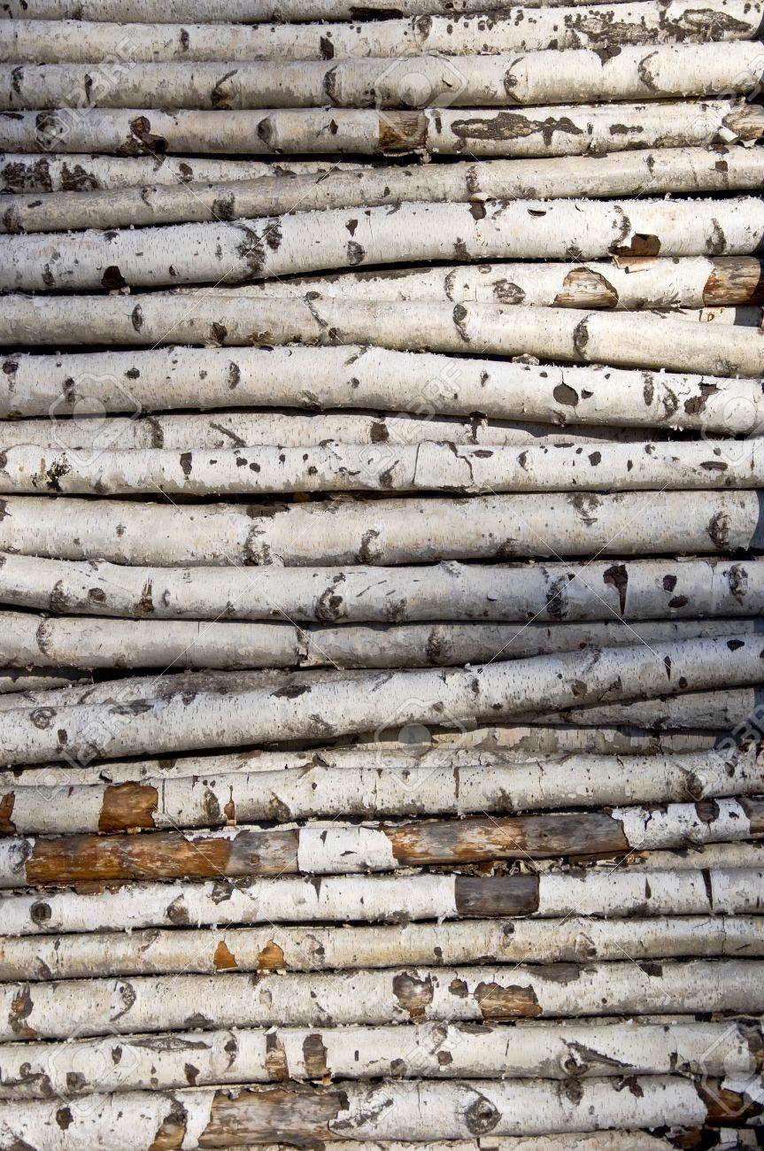 birch logs the best place to buy birch wood for cheap tall birch