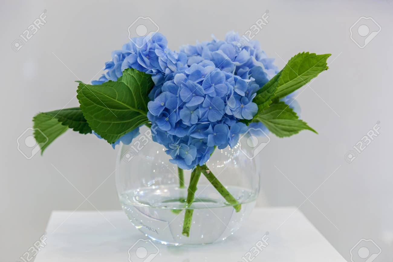 Bouquet Of Blue Hydrangea Flowers In A Vase On A Pedestal Stock ...