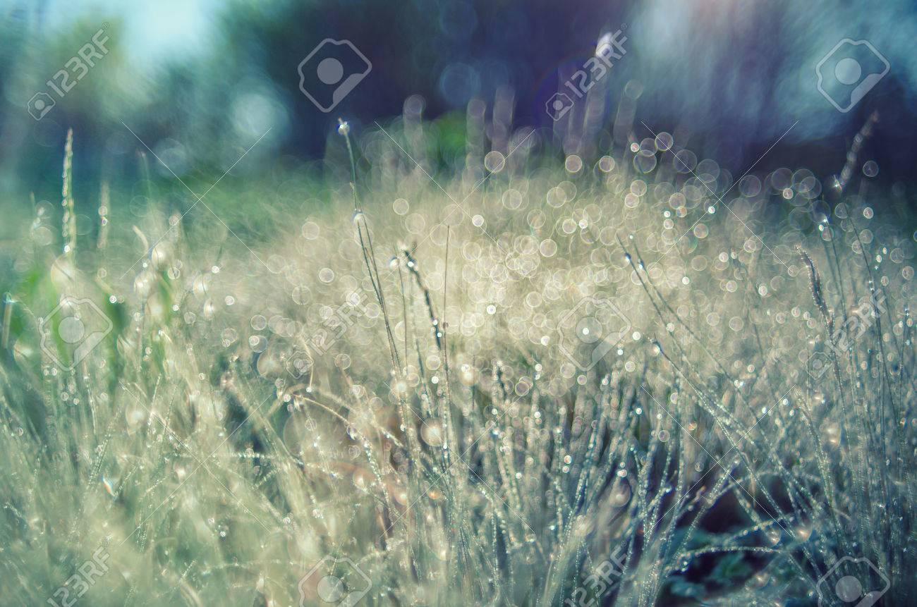 bright sunlight summer grass with dew drops. soft focus. bright