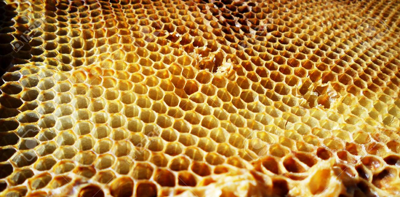 the photo shows beehive honey nectar hive swarm bees honeycomb