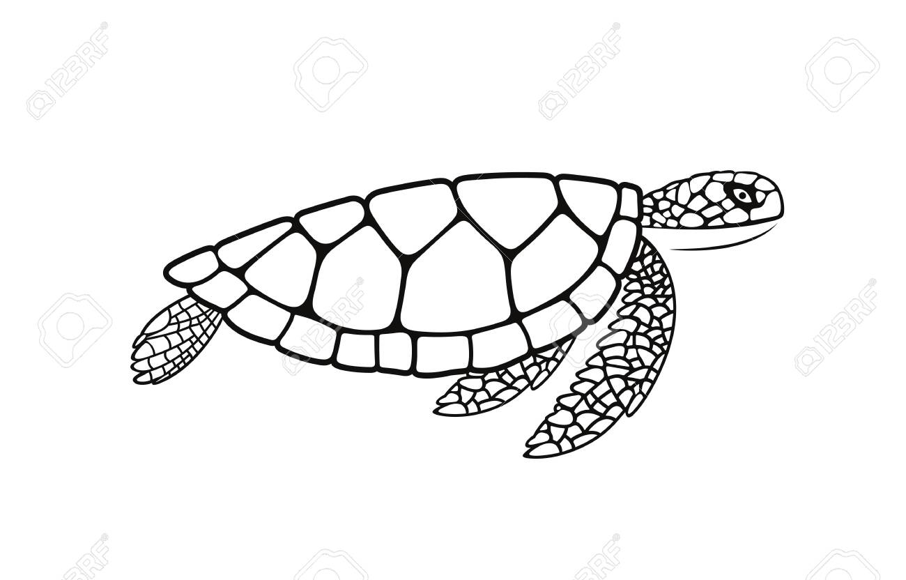 Sea Turtle Outline Isolated Turtle On White Background Reptile Royalty Free Cliparts Vectors And Stock Illustration Image 136236354 Similar fonts for turtle outline from myfonts.com. sea turtle outline isolated turtle on white background reptile