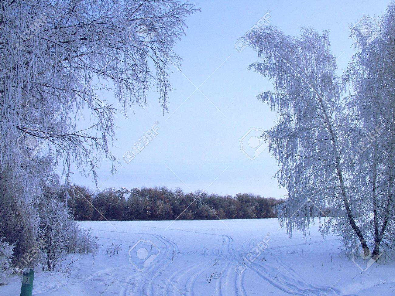 The nature winter new year Stock Photo - 3792368