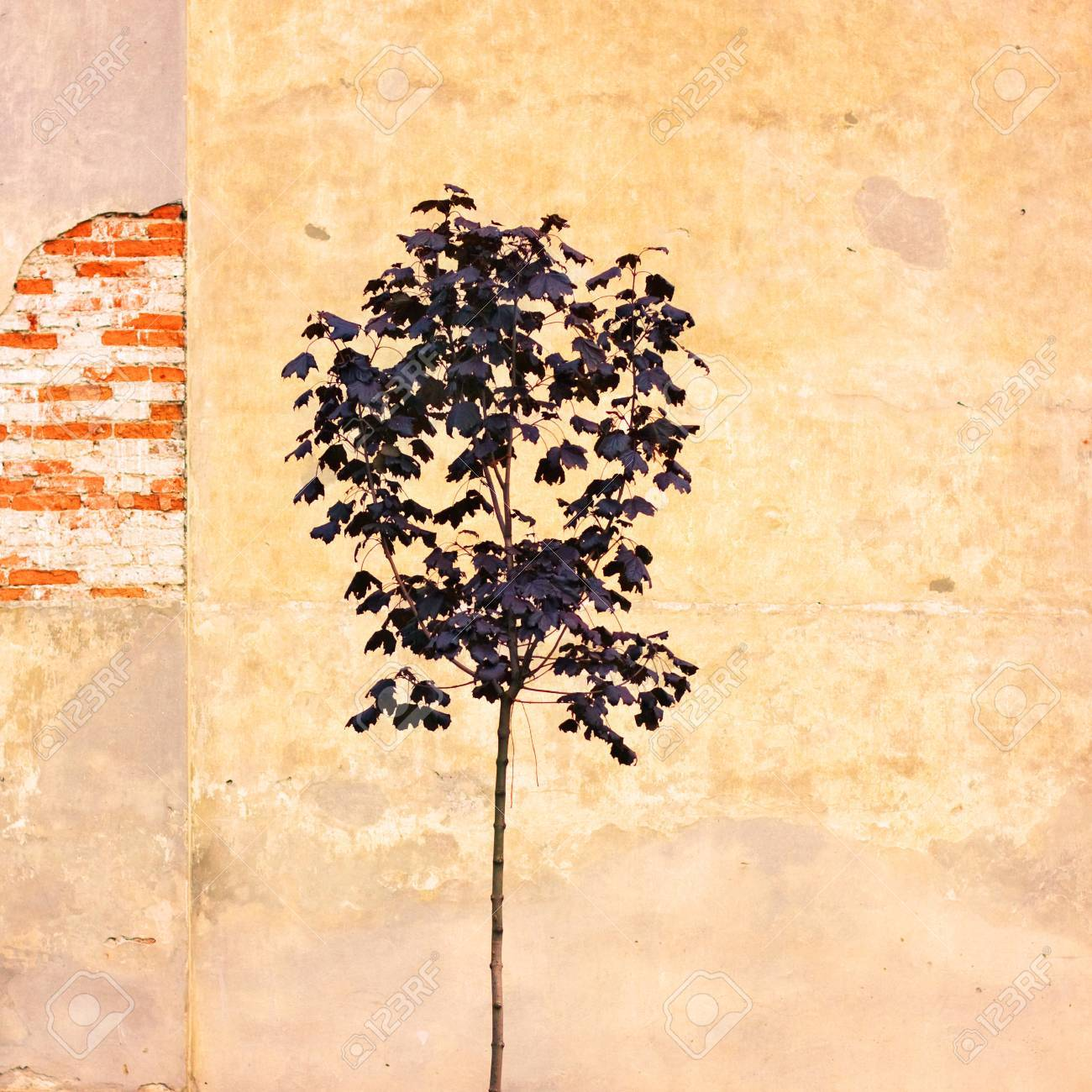 Lonely Tree In Aged Textured Art Background. Depression And ...