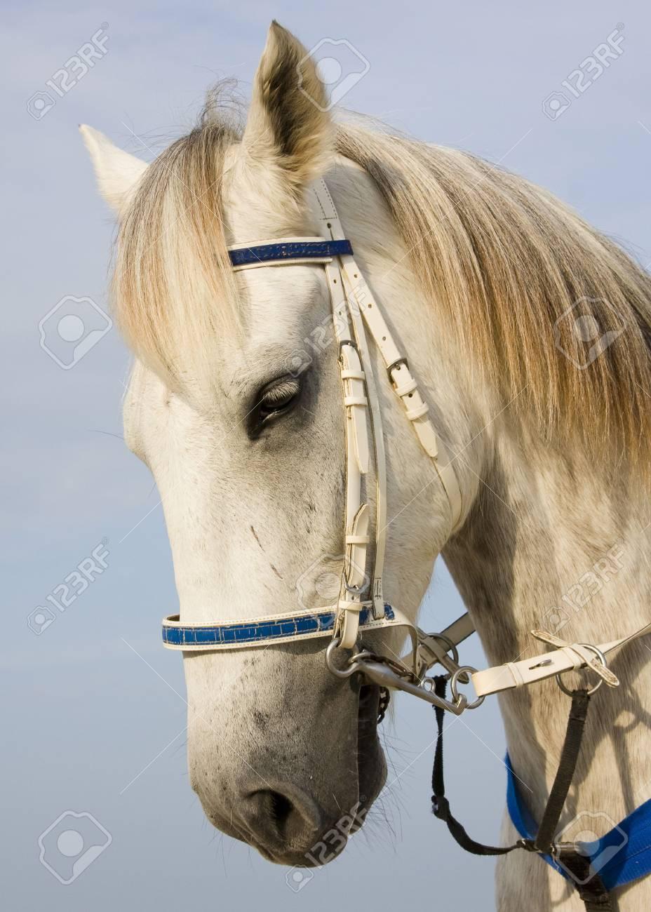 Horse head portrait Stock Photo - 8231342