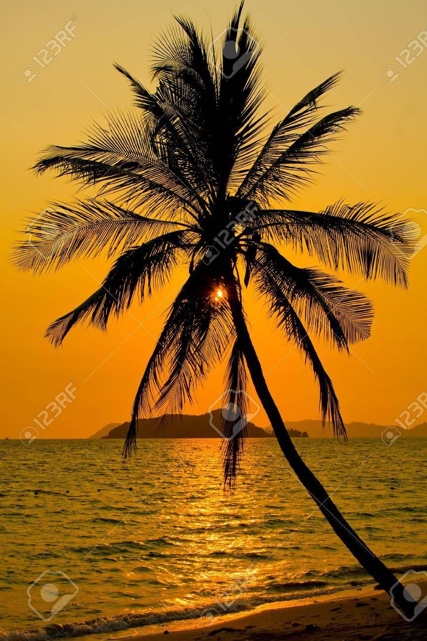 Palm trees silhouette at sunset, Koh Mak island, Thailand Stock Photo - 12843817