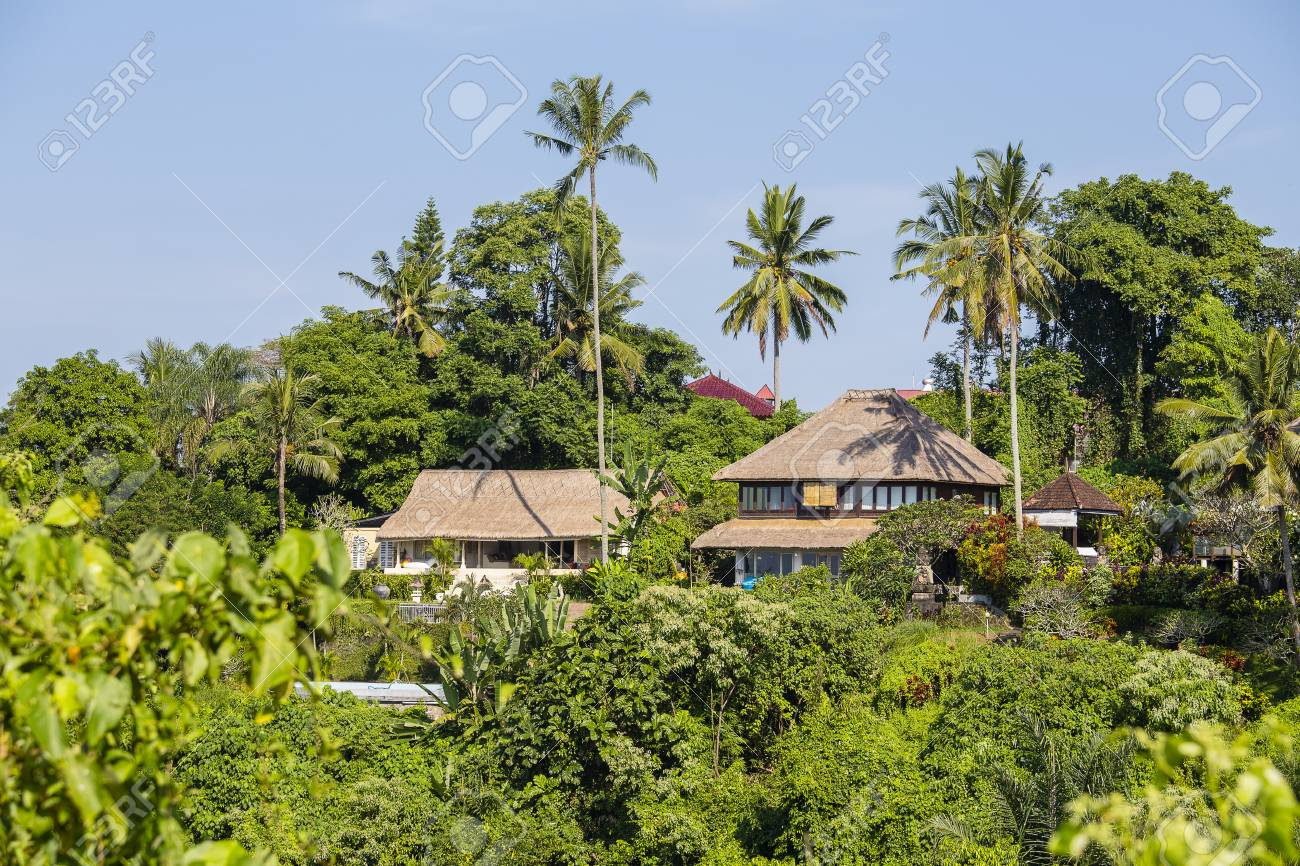 Morning View Of Green Coconut Palm Trees And Houses In Ubud