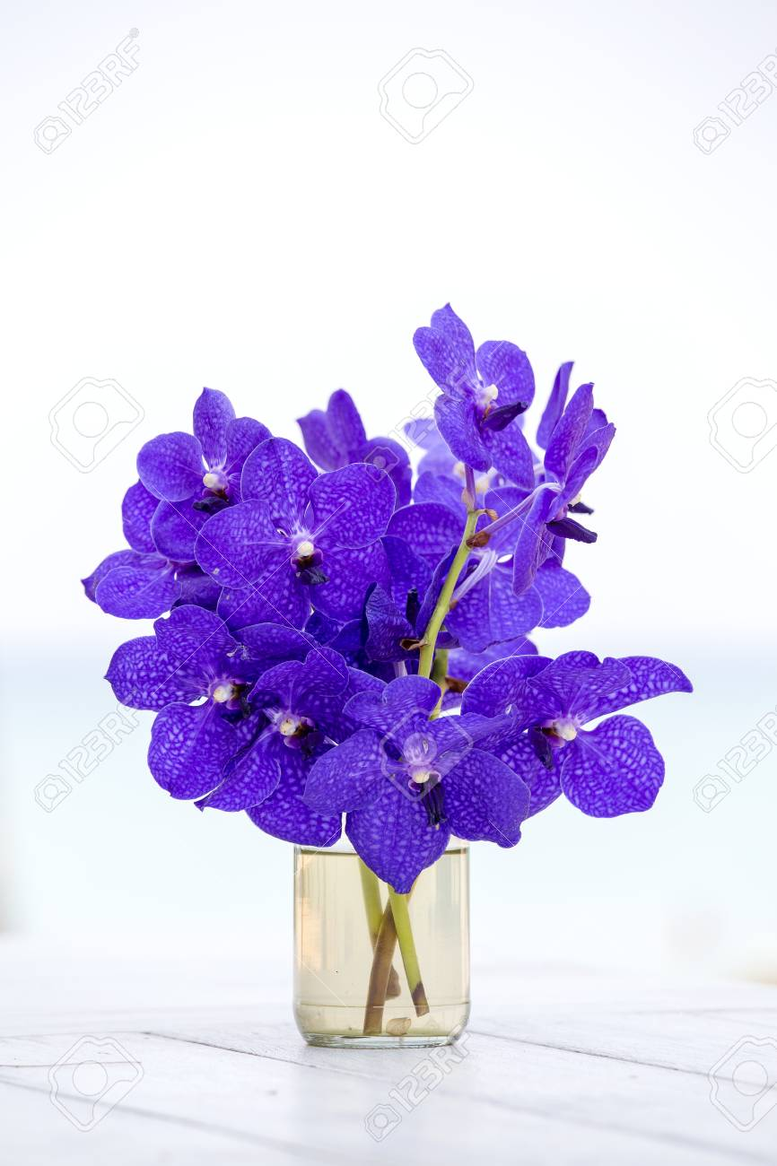 Close Up Beautiful Bouquet Of Blue Orchids Flower On A White Stock Photo Picture And Royalty Free Image Image 102554804