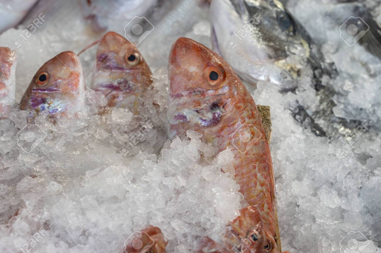 Raw fish on ice for sell in the street market. Bodrum, Turkey. Close up - 152146985