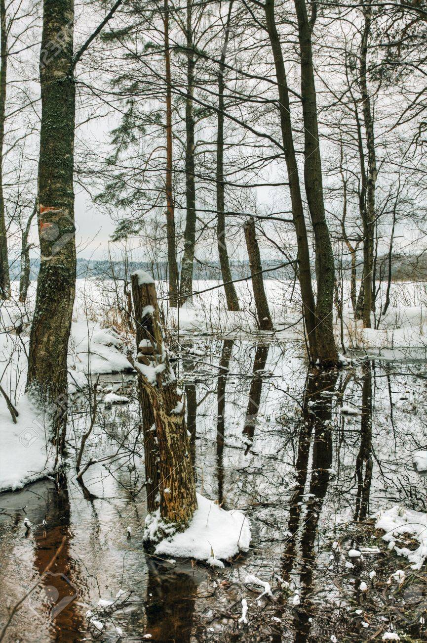 spring thaw in the winter forest Stock Photo - 12457029