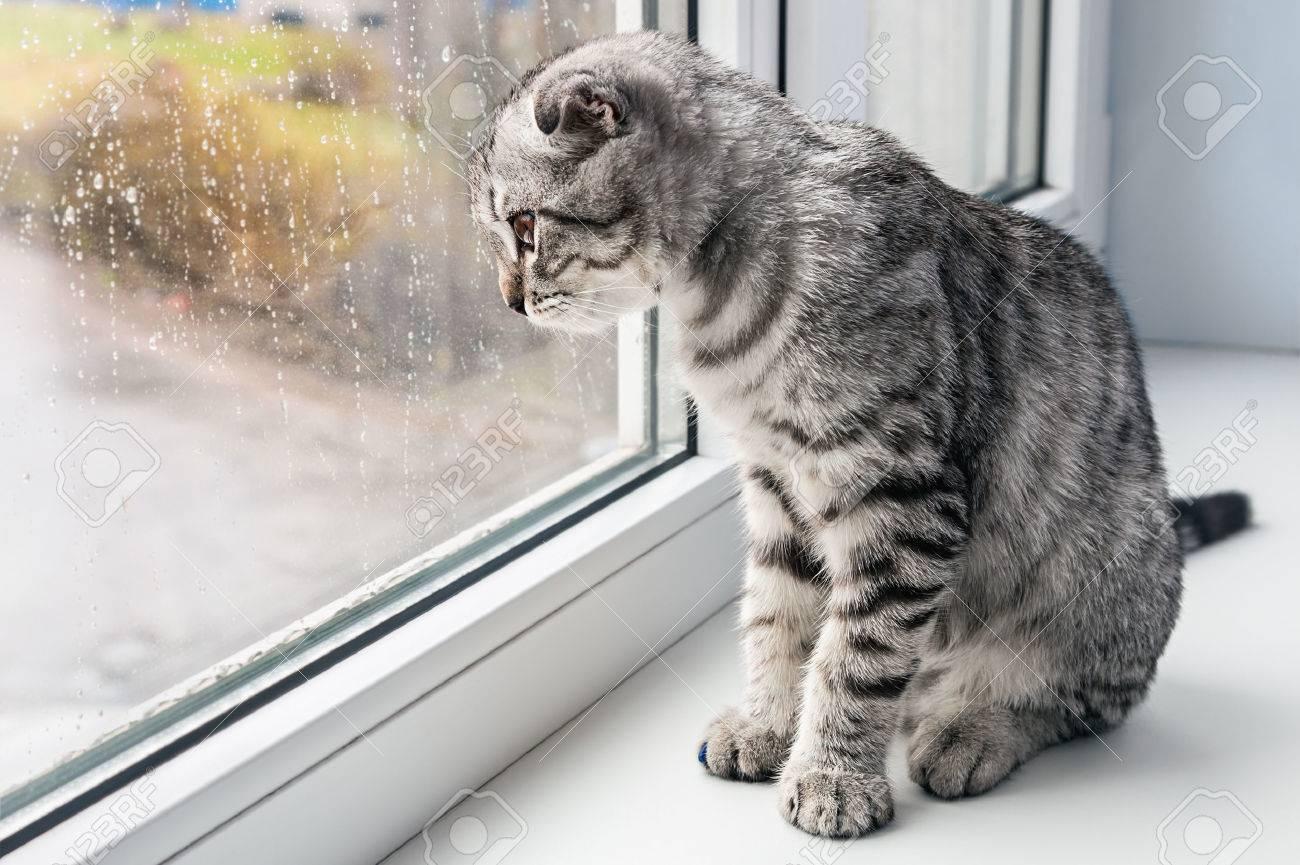 Katt Sitter På En Fönsterkarm Och Tittar Ut Genom Fönstret Royalty ...