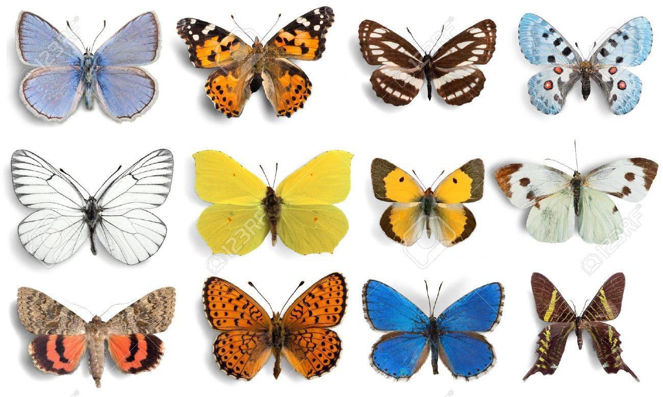 Papillon, insecte, aile. Banque d'images - 42323082