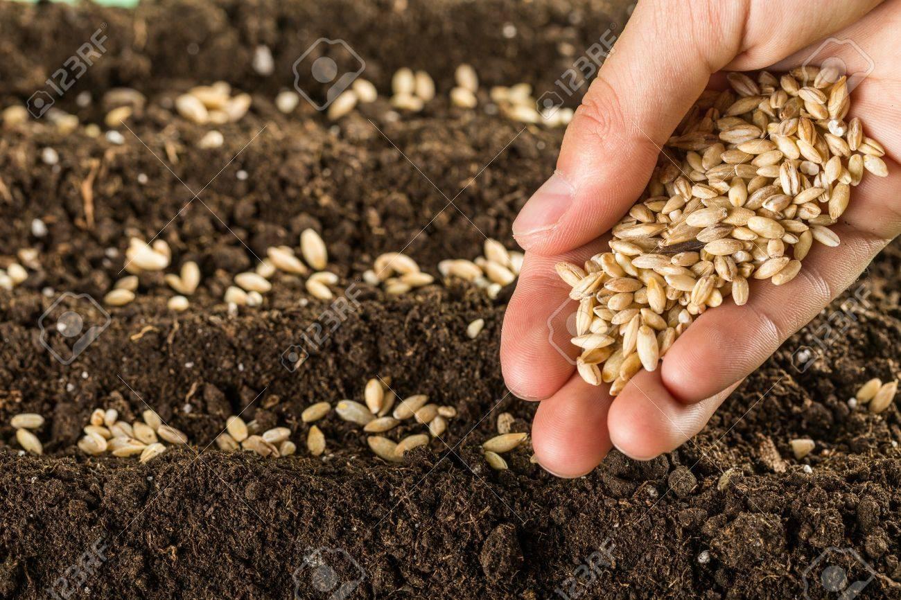 Seed. Stock Photo - 50480828