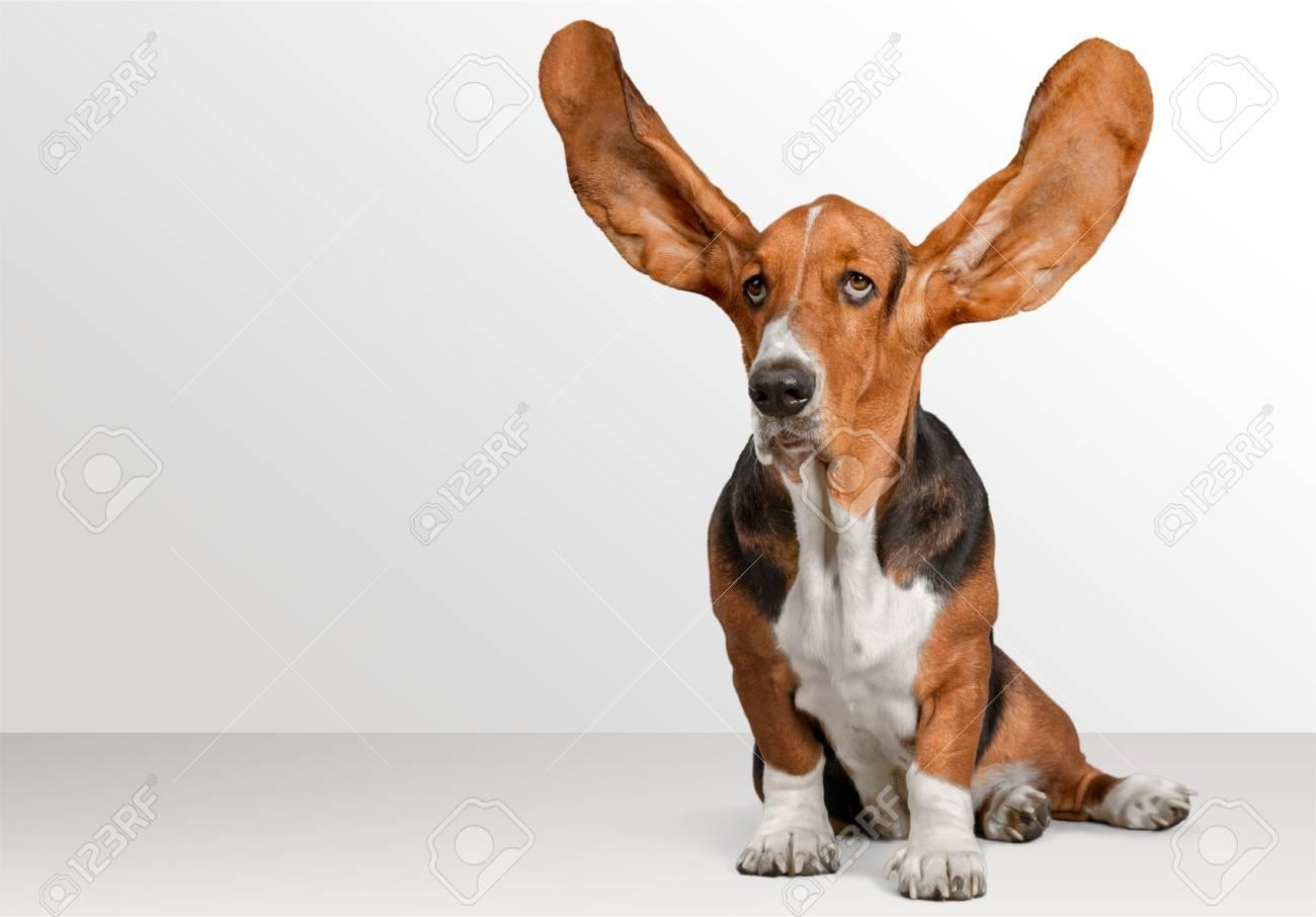 Dog. Stock Photo - 51285111