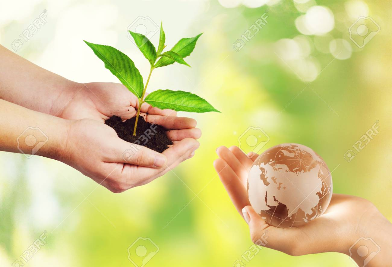 Two people human hands holding/ saving growing big tree on soil eco bio globe in clean CSR ESG natural background: World environment day go green concept: - 92218824