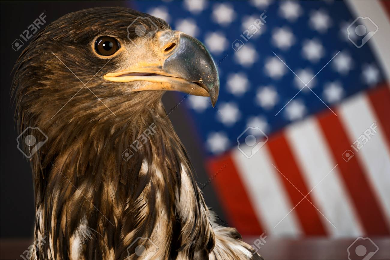 American bald eagle symbol of america with flag united states american bald eagle symbol of america with flag united states of america patriotic buycottarizona Choice Image