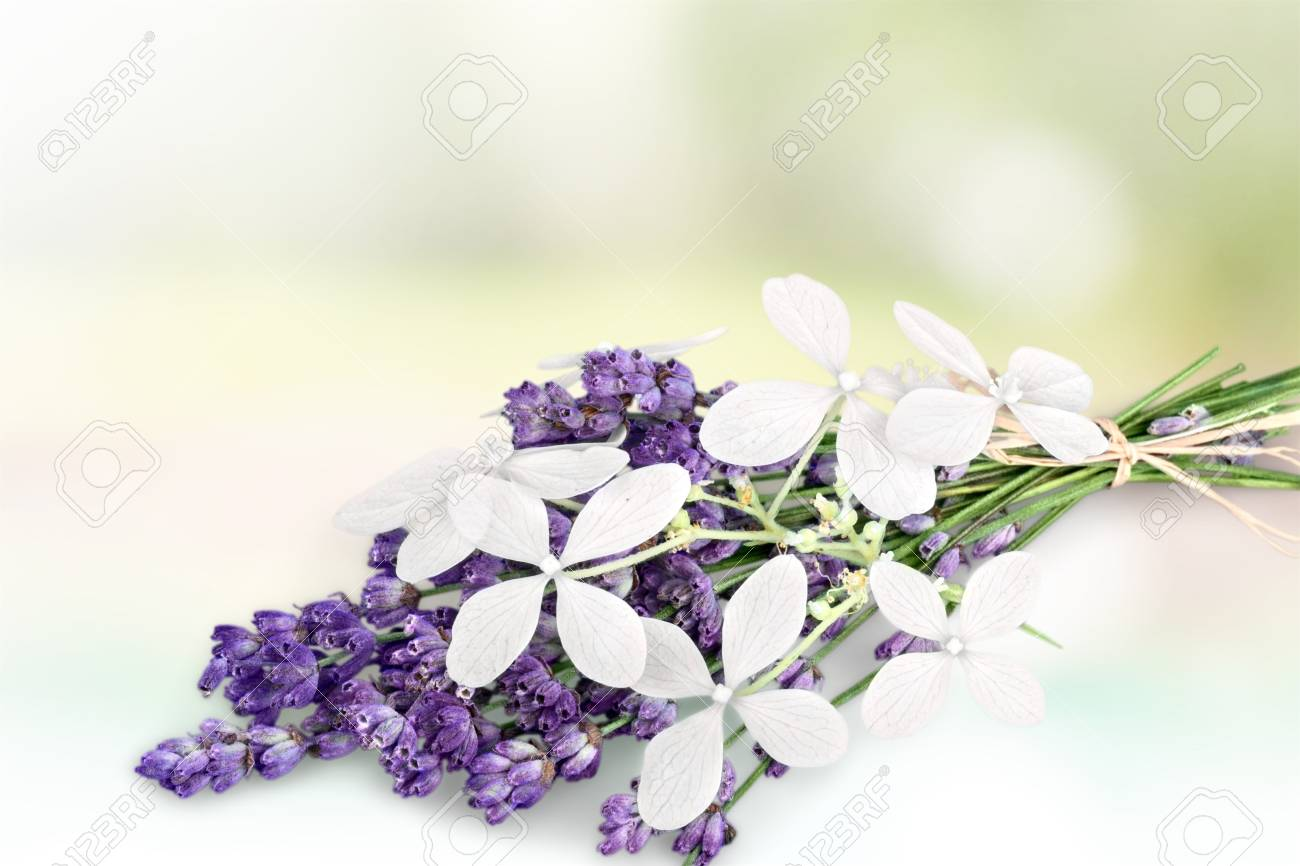 Bunch Of Lavender Nd Jasmine Flowers On A White Background Stock