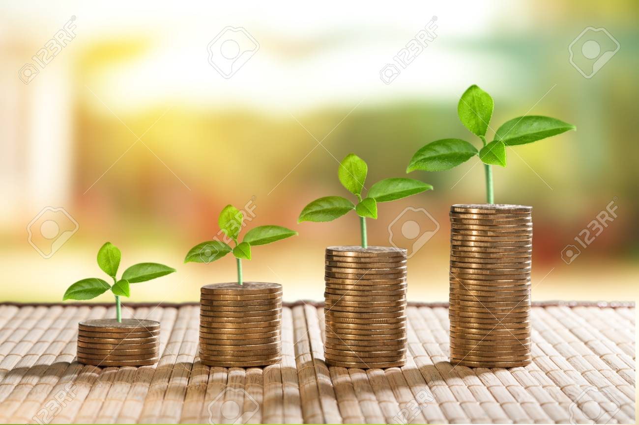 coins and money growing plant for finance and banking, saving money or interest increasing concept - 124674516