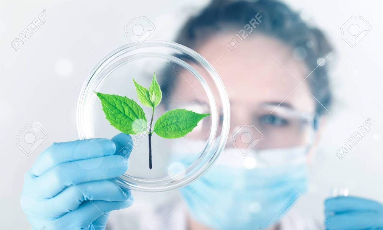 Scientist holds sprout lab laboratory plant agriculture agronomy analyzing - 124316205