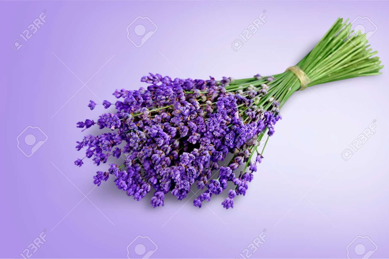 Bouquet of lavender flowers on white background - 125155387