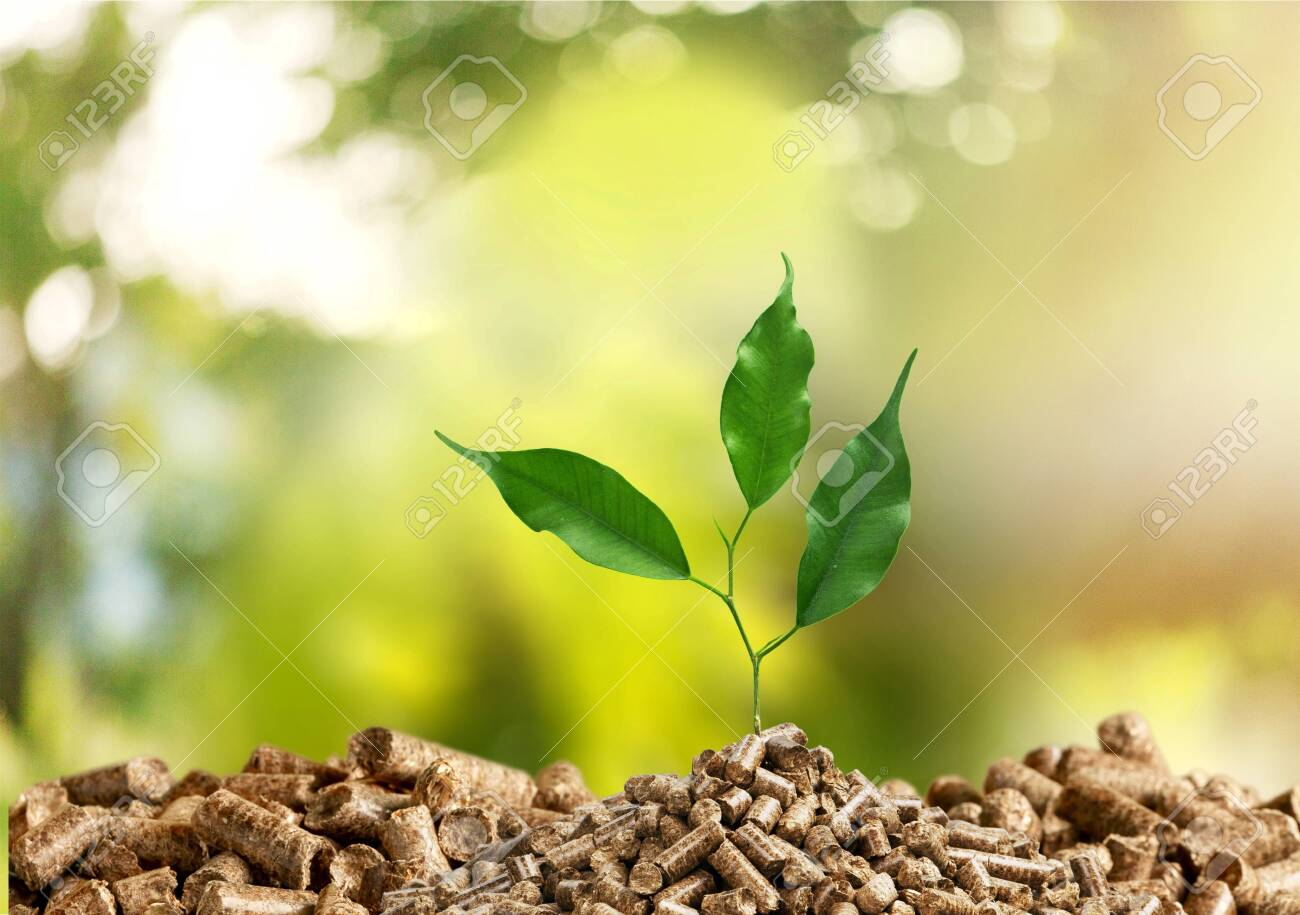 Growing plant tree on green background - 129160988