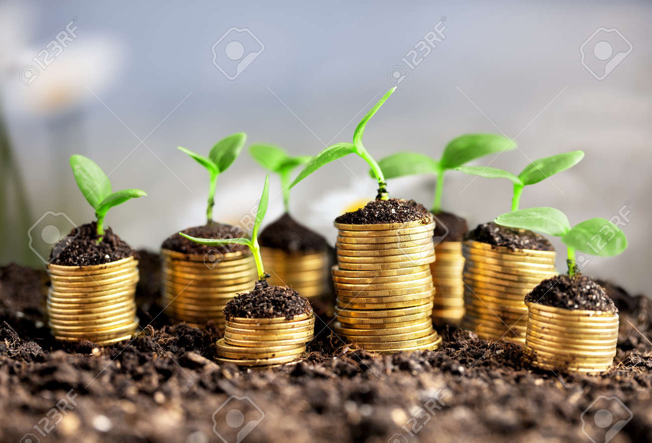 Coins in soil with young plants on background - 133653979