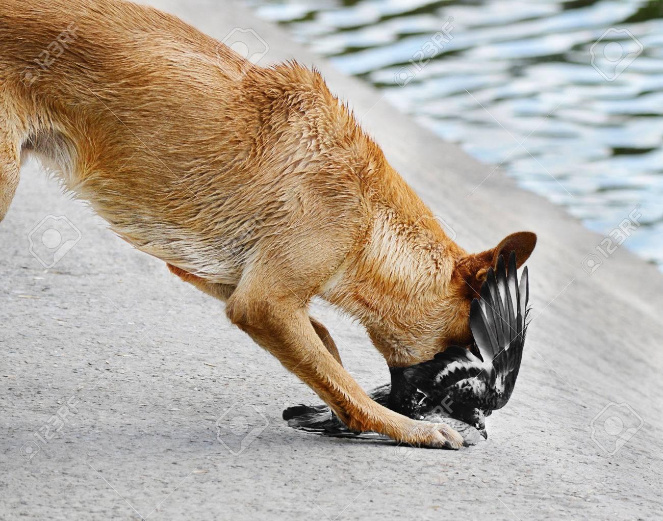動物の狩猟犬攻撃鳩の餌食 ロイ...